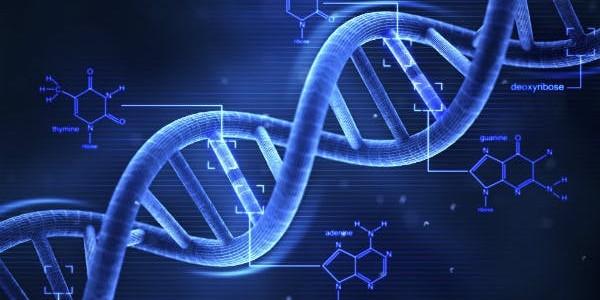 Carcinoma renale organo-confinato: varianti geniche capaci di predirne l'aggressività